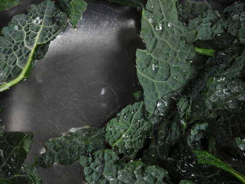 Italian kale shown in a sink with water