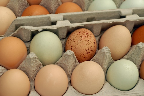 free range chicken eggs in cartons, some brown and some blue-green