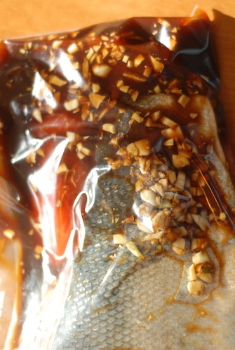fish shown in ginger garlic tamari rum marinade in a gallon Zip-lock bag
